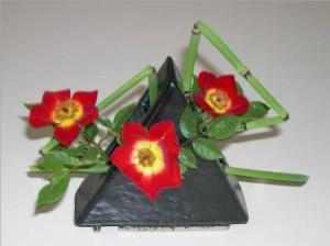 Modern Roses 'Neon Cowboy'