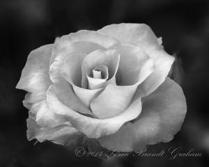 rose calendars - Leonidas