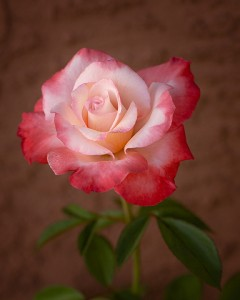 rose calendars gemini