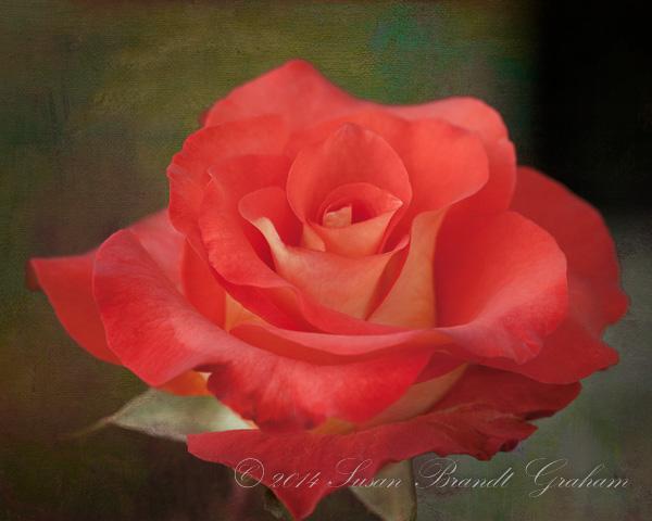 Rose Leonidas