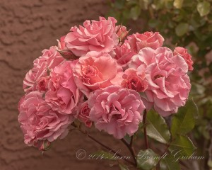 rose calendars Dream Weaver