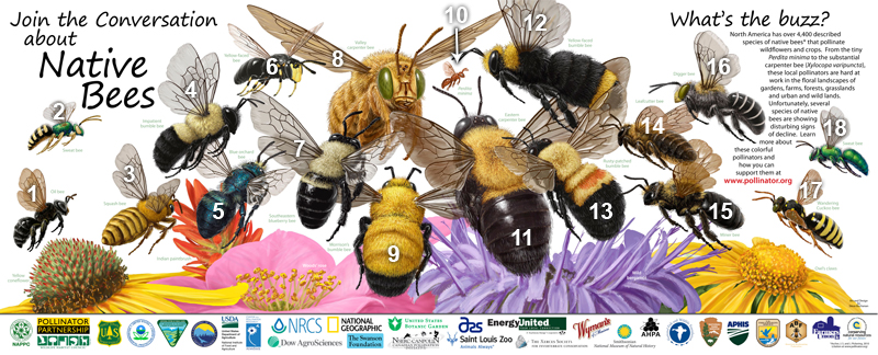 2016 pollinator week