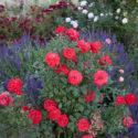 Price Garden Corrales